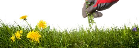 Verger éco-responsable : un challenge aux bénéfices multiples