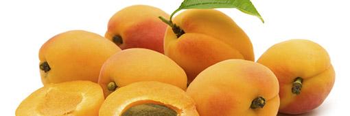 Fiche technique sur l'abricot français