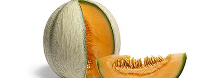 Fiche technique : le Melon, le roi de l'été