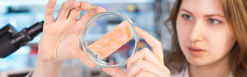 La DGAL, garante de la sécurité sanitaire des aliments en France