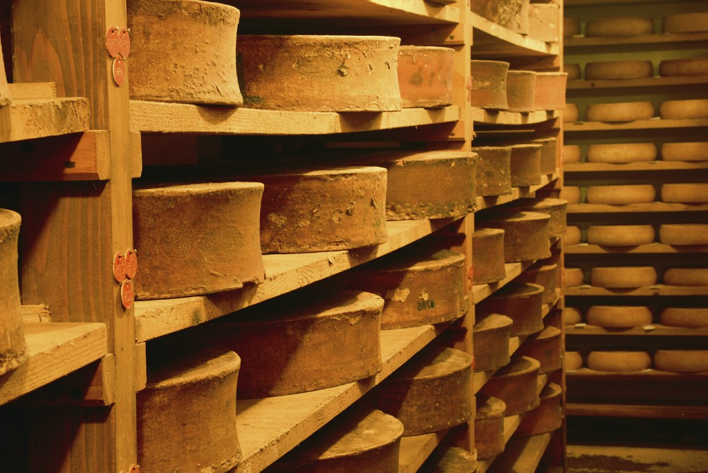 tasted cheese in refining in a traditional cellar