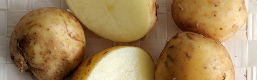 La pomme de terre primeur de l'île de Noirmoutier : c'est la saison !